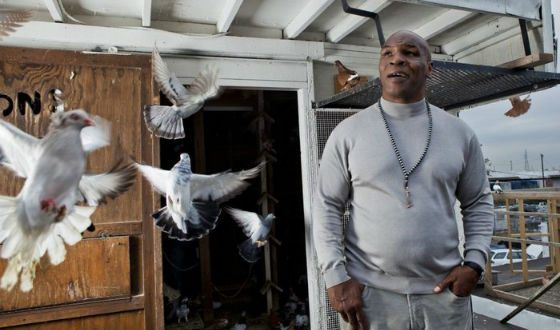 Mike Tyson in a reality pigeon breeding show