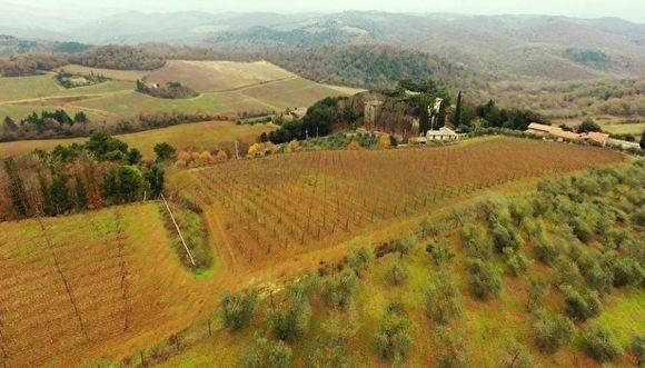 Allegedly Medvedev-related vineyards