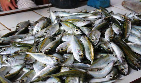 Больные триметиламинурией распространяют рыбный запах