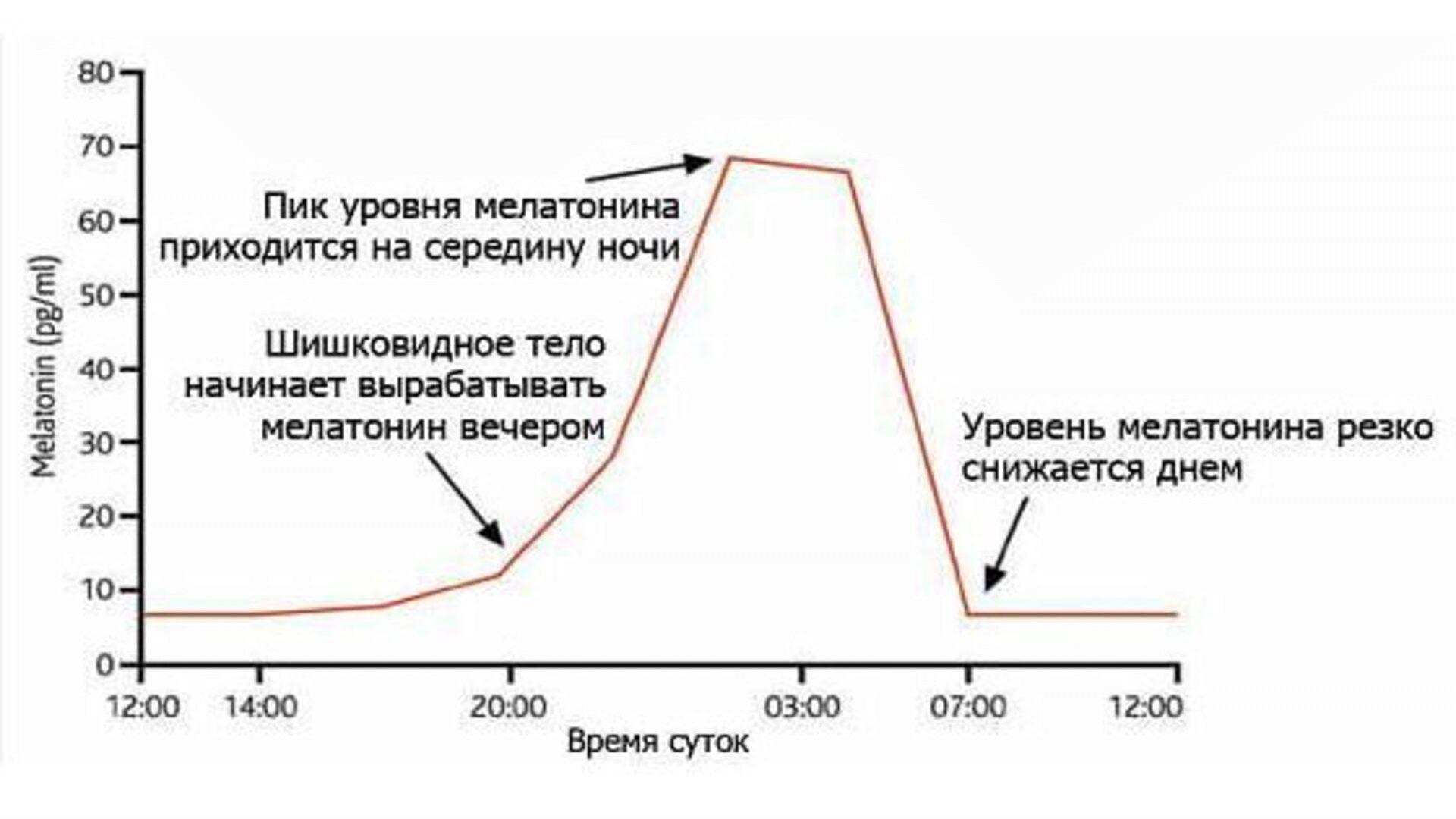 График выработки мелатонина нашим организмом