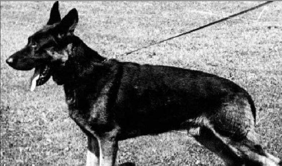 Dog named Ajax