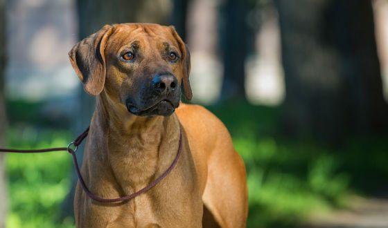 ВПодмосковье суд обязал хозяев выселить собаку из-за «невыносимого воя»