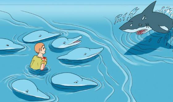 Дельфины спасли серфера от акулы