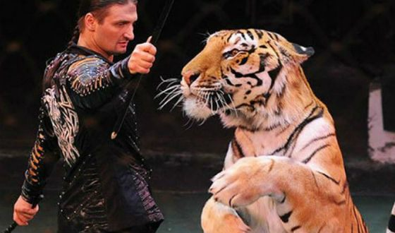 Edgard Zapashny almost torn apart tigers in front of the public