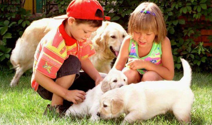 Близнецам больше нравится проводить время с животными, чем играть в игрушки
