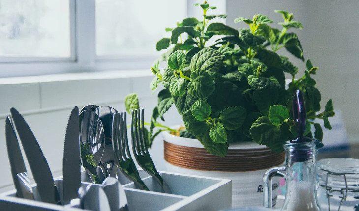 Чай со свежей мятой стоит того, чтобы попробовать вырастить ее