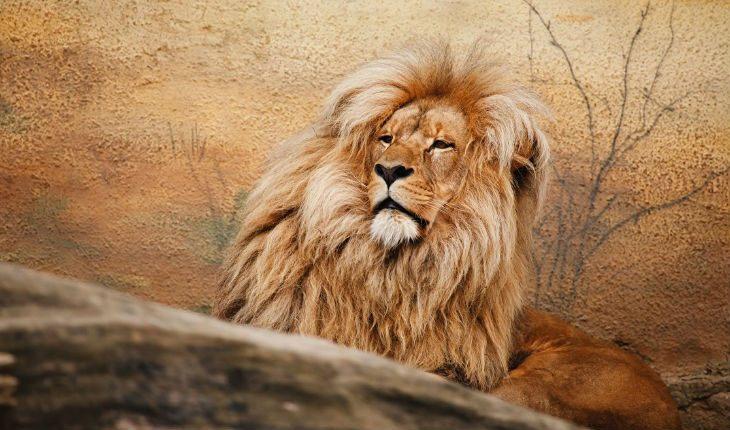 Какие недостатки у Льва в любви и браке?
