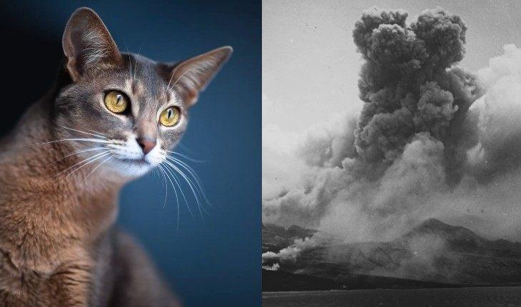 5 животных, которые предсказывают стихийные бедствия