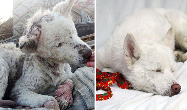 10 фото бездомных собак до и после того, как их приютили