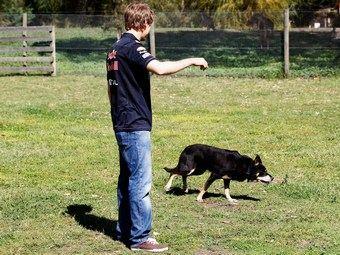 Гонщик Себастьян Феттель уговаривает собаку ретироваться