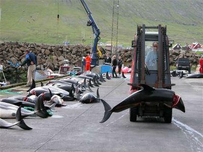 Убивать дельфинов легко?