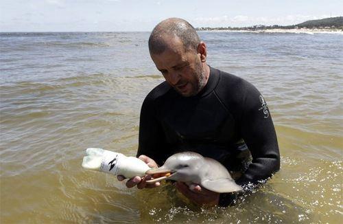Этот дельфиненок спасен человеком, а не убит. Ему повезло.