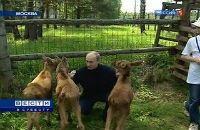 Путину с лосями говорить легче, они не уличат