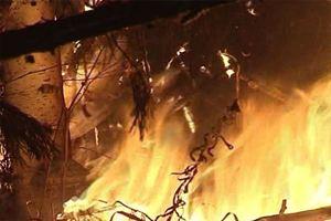 Дерево сгорело полностью