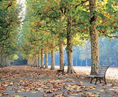 Самым популярным культурным мероприятием является прогулка по парку