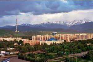 В Алматы предложили вырубить деревья