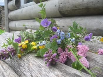Полевые цветы для Александра Барыкина