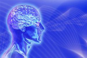 Структура человеческого мозга чрезвычайно сложна