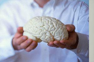 Ученые из Бразилии пересчитали нейроны в человеческом мозге
