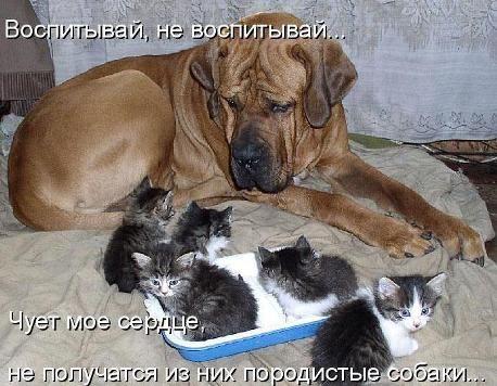 Собака - не просто друг человека, для кого-то она и мать