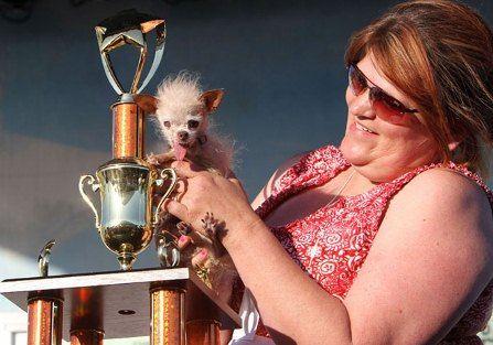 Самая уродливая собака в мире умерла в