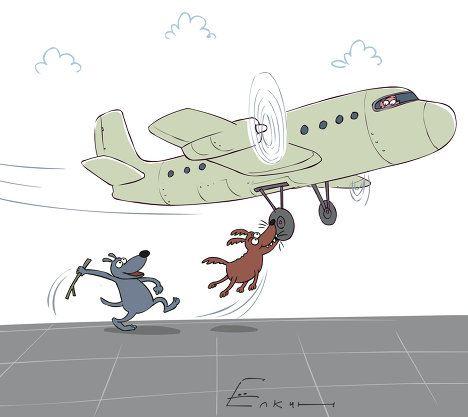 Собаки, находившиеся на взлетно-посадочной полосе аэропорта «Томск»