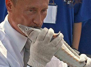 """Вице-президент Европарламента призвал отключить Россию от SWIFT немедленно: Это стало бы профилактикой от желания """"прорубить коридор"""" в захваченный Крым - Цензор.НЕТ 6287"""
