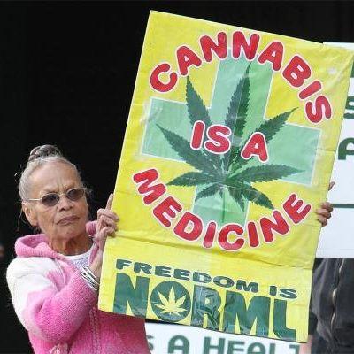 Новозеландцы требуют легализовать коноплю