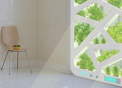 Окно-огород