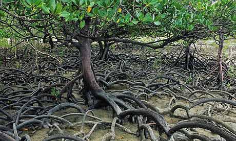 Экзотический мир мангровых лесов Вьетнама - впечатляющее зрелище