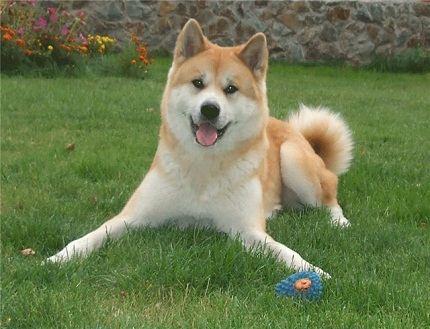Самых преданных пород собак | Fresher - Лучшее из