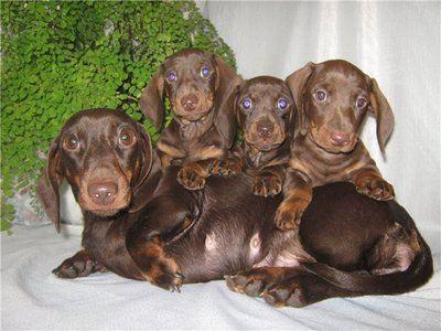 Джеймс Ирвин спас не только свою жену и детей, он спас своих собак и щенков