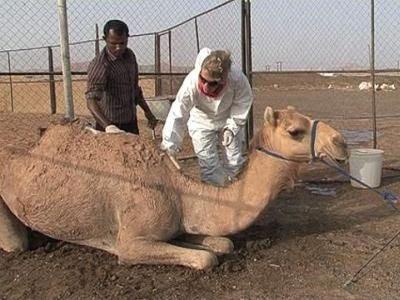 Биргит Мария и сама может помыть верблюда