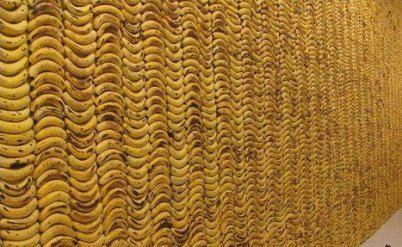Необычные обои, украшающие стену, состоят из семи с половиной тысяч бананов
