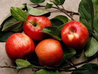 Урожай приносит моральное удовлетворение