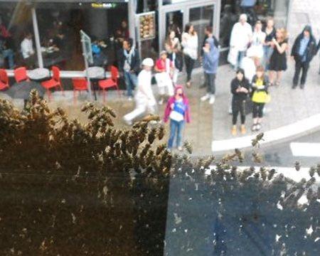 Огромный пчелиный рой атаковал офисное здание в Стокгольме
