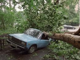 Деревья могут повредить автомобили