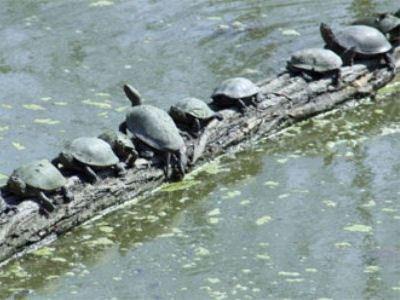 1500 черепах сбежало с фермы
