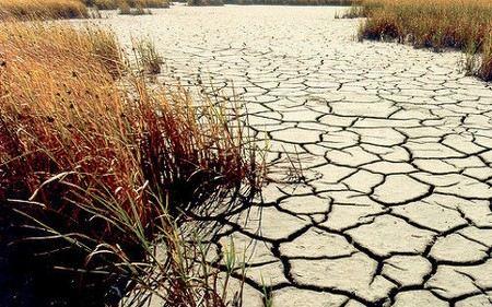 Из-за засухи в некоторых районах Курганской области погибли до 66% посевов