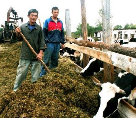 Рабы-узбеки ухаживали за скотом на ферме полковника МВД