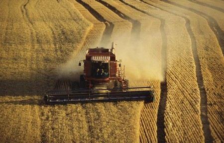В 2012 году в России планируют собрать на 14 млн тонн меньше зерновых, чем в прошлом году