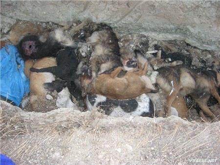 В Самаре с начала года крысиным ядом отправлено 12500 бездомных собак