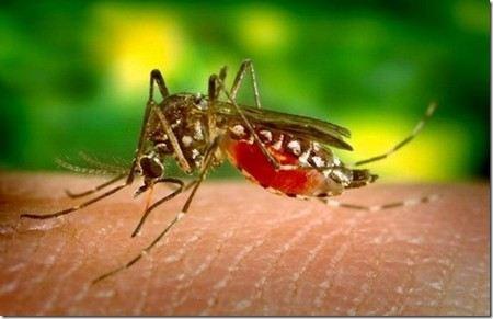 В США от лихорадки Западного Нила погибли 26 человек. Количество заболевших приближается к 1000 человек