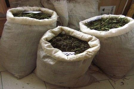 2600 килограммов марихуаны и двоих наркокурьеров задержали в Индонезии.