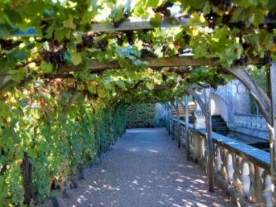 Виноградники Франции - ее национальное достояние