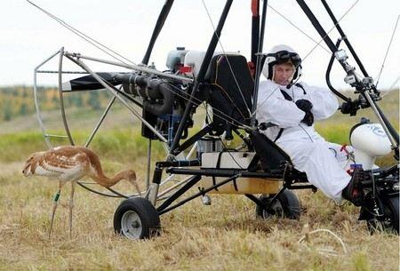 Из-за «Полета надежды» Владимира Путина погибли несколько журавлей, еще несколько птиц искалечены.