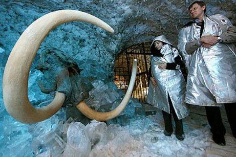 Участники Яна-2012 нашли живые клетки мамонта
