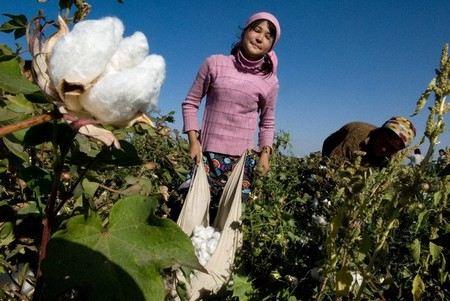 В Узбекистане перестала ездить Скорая помощь и отменены занятия в вузах и техникумах. Преподавателей и врачей отправили убирать хлопок