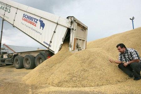Российские запасы зерна оцениваются в 34,6 млн тонн. По сравнению с прошлым годом, они снизились больше, чем на 21%.