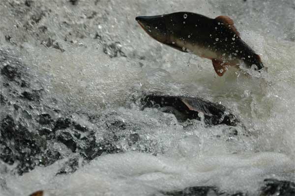 С начала июля промысел был закрыт из-за нереста рыбы